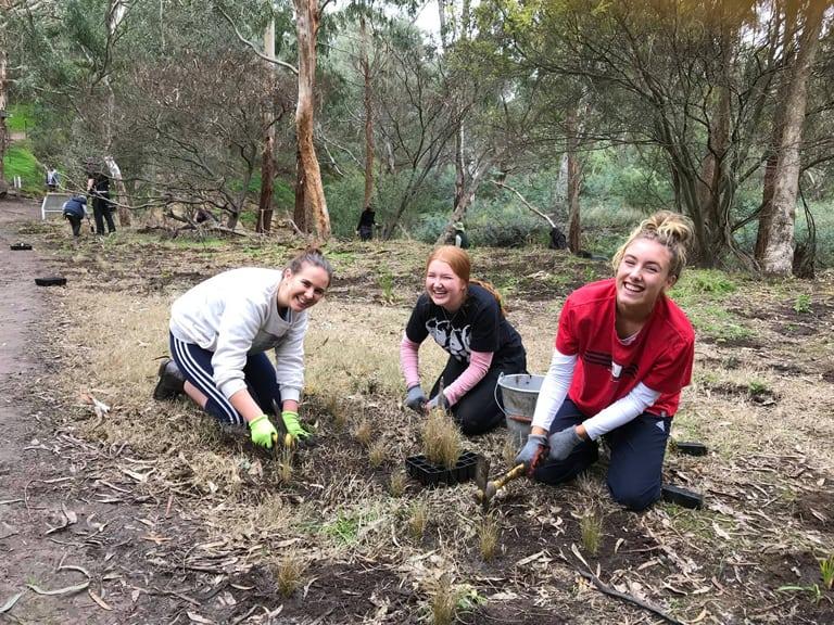 Planting at Mt Puffalo