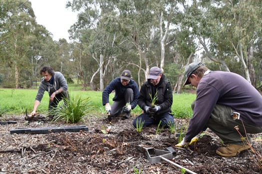 Friends of Darebin - Olympic bushplots