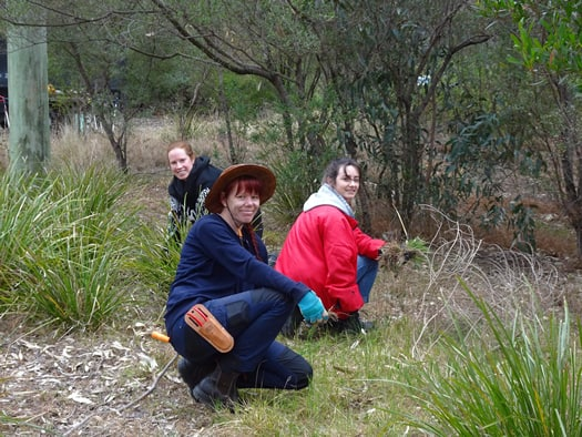 Friends of Darebin - Southern Rd wetland