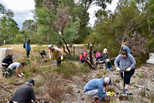 Friends of Darebin Thornbury bushplots 2018