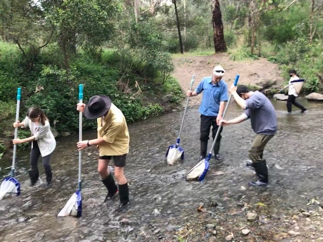 Monitoring Darebin Creek Wetlands